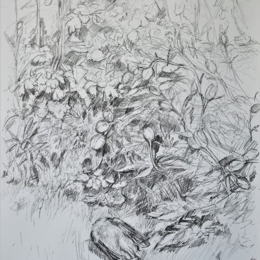 "Flutter By The Sea graphite on cartridge paper 33"" x 23"" / 83.82 cm x 58.42 cm"