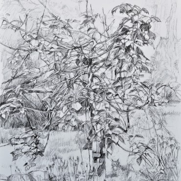 "An English Country Canyon graphite on cartridge paper 33"" x 23""'/ 83.82 cm x 58.42 cm"