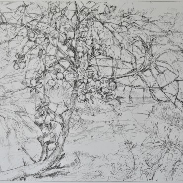 Apple Vale 2020 graphite on paper 20 1/2 x 24 inches / 52.07 cm x 60.96 cm